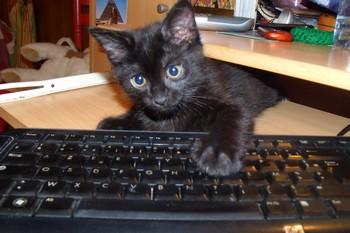 http://krommlech.cowblog.fr/images/Animaux/Chats/DSCF0012.jpg
