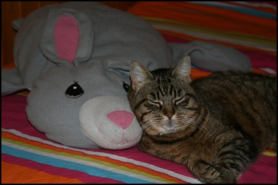 http://krommlech.cowblog.fr/images/Animaux/Chats/IMG8711Copie.jpg