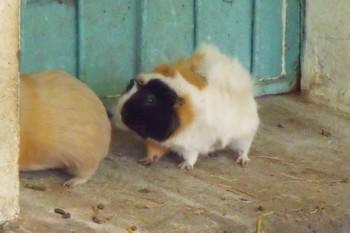 http://krommlech.cowblog.fr/images/Animaux/LesanimauxdelaPep/DSCF5043.jpg