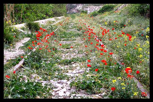 http://krommlech.cowblog.fr/images/Fleurs/Dautres/343435601272a4960131.jpg