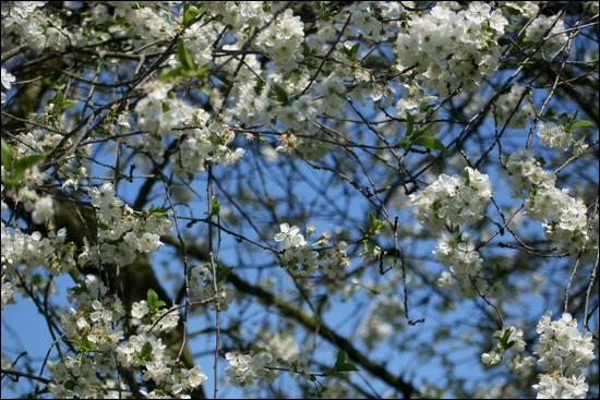 http://krommlech.cowblog.fr/images/Fleurs/Jardin/IMG7716.jpg