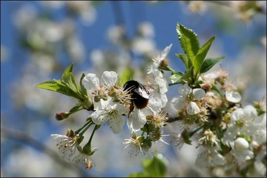 http://krommlech.cowblog.fr/images/Fleurs/Jardin/IMG7744.jpg