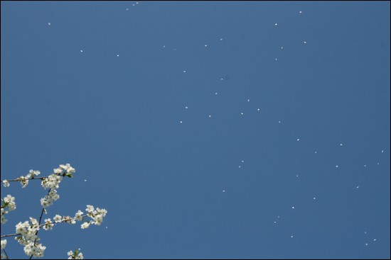 http://krommlech.cowblog.fr/images/Fleurs/Jardin/IMG7753.jpg